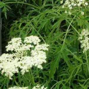 Какие свойства имеют лечебные растения: фото, полезные свойства и противопоказания к применению лекарственных трав