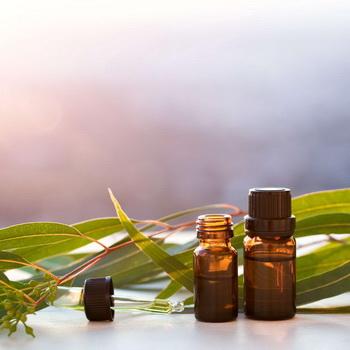 Эфирное масло эвкалипта разных видов: свойства и применение эвкалиптовых масел в ароматерапии